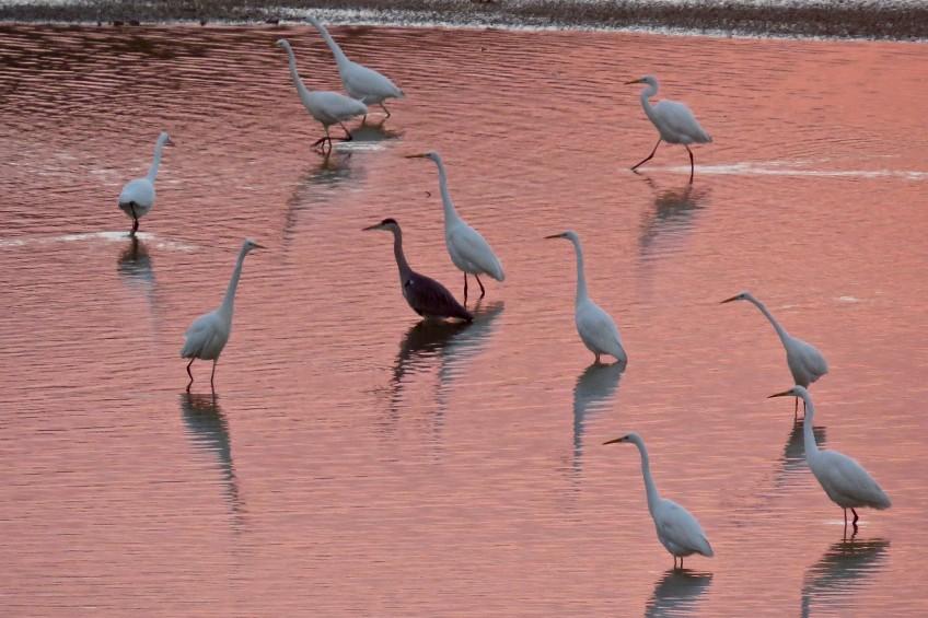 Liste des oiseaux à observer
