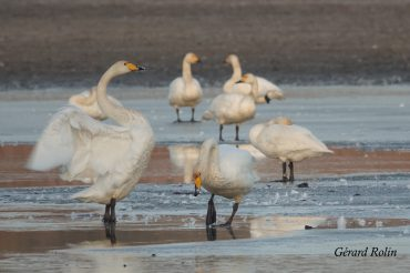 Birding in December and January: cranes and wintering birds
