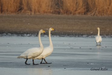 """February: wintering birds, cranes and first """"spring"""" migrants"""