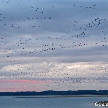Séjours ornithologiques et Festival de Montier