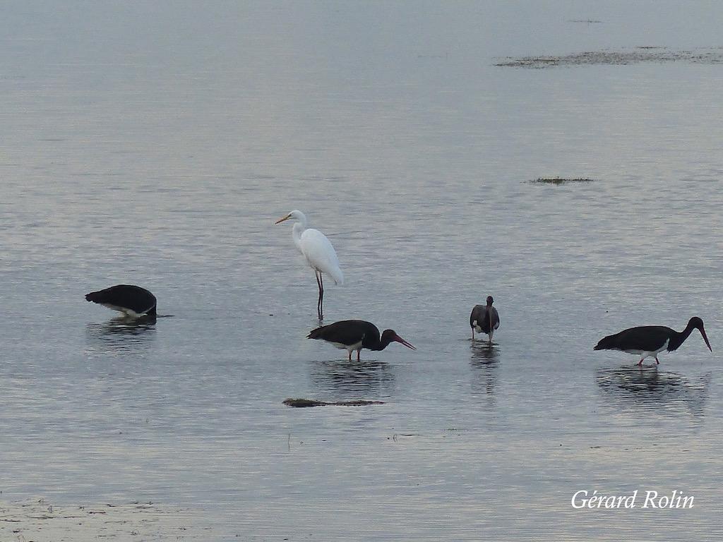 Observer les oiseaux en septembre