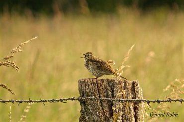 11-13 juillet: 121 espèces en 2 jours et demi / 121 bird species in 2 and a half days.