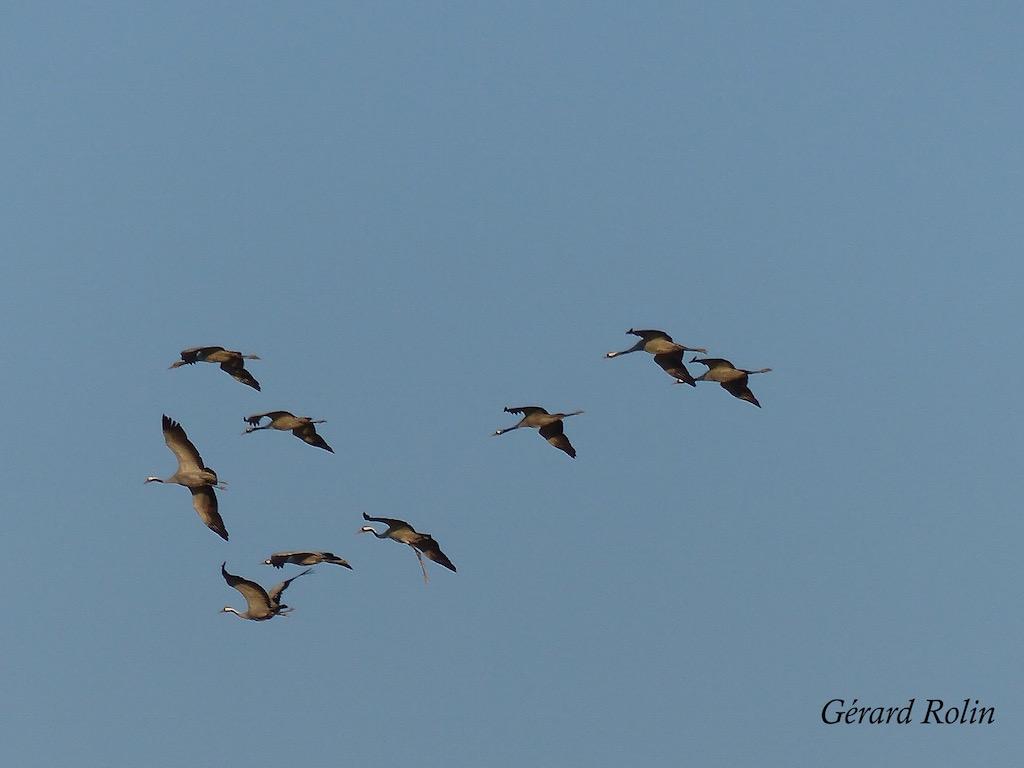 1ère Escapade ornithologique sur les bords du lac du Der avec Escursia