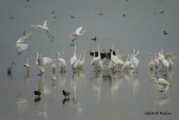 Balade ornithologique en Champagne du 20 au 23 novembre