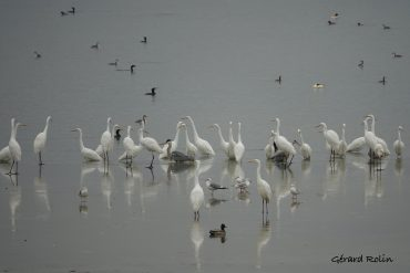 A birding calendar