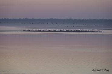 Fin février: migration des grues cendrées et oiseaux hivernants