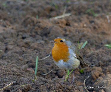 Sorties «Oiseaux et chants d'oiseaux»
