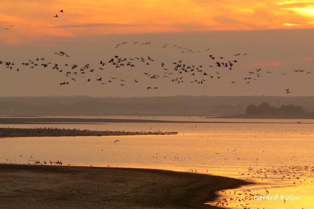 Birding in October