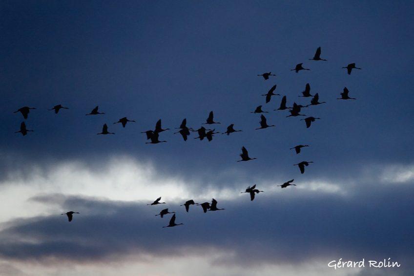 2ème escapade ornithologique sur les bords du Der avec Escursia du 20 au 23 novembre.