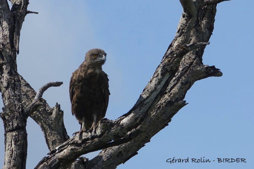 Voyage ornithologique et naturaliste dans l'est de l'Afrique du Sud et au Lesotho