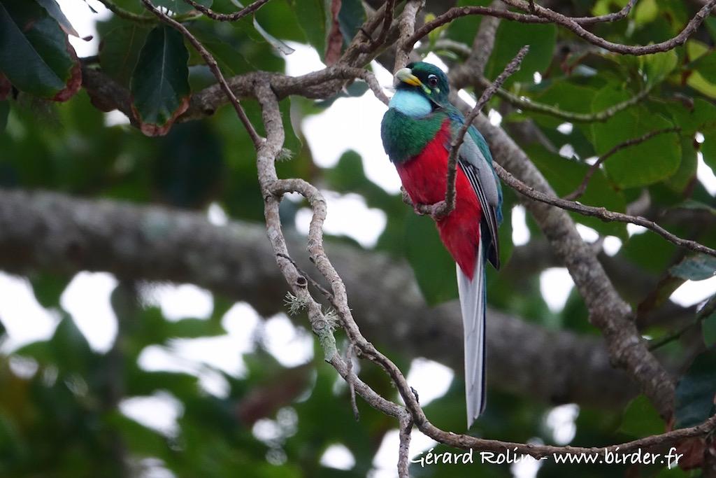 Voyage ornithologique et naturaliste en Afrique du Sud et au Royaume du Lesothodu 27 septembre au 11 octobre 2018, un objectif largement dépassé.
