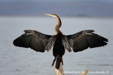 Séjour ornithologique au lac Baringo, Kenya.