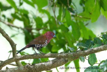 Voyage ornithologique Escursia-Birder en Afrique du Sud et au Lesotho du 10 au 24 mars 2020