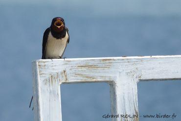 Les «Estivales» de Birder: des promos pour découvrir le s oiseaux en juillet – août