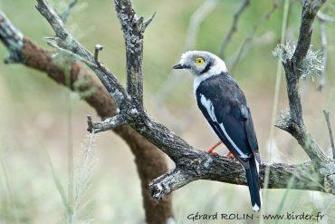 En 2021, partez à la découverte des oiseaux du monde avec Birder-Escursia