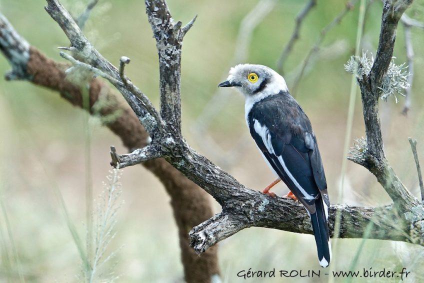 En 2020, partez à la découverte des oiseaux du monde avec Birder-Escursia