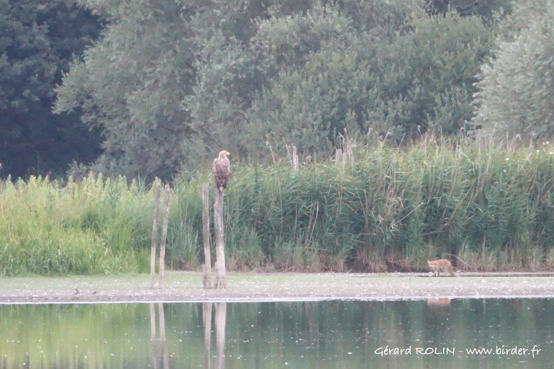 Séjour ornithologique Escursia – Birder du 31 juillet au 3 août